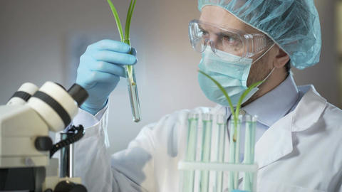 Scientific laboratory worker examining sprouts of artificially excreted cereals Footage