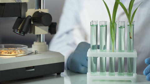 Laboratory engineer inventing substance that accelerates germination of cereals Footage