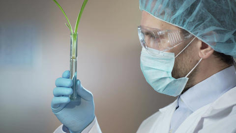 Cosmetic laboratory worker carefully examining samples before taking extracts Footage