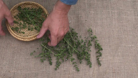 Man placing herbs to dry on linen material Footage