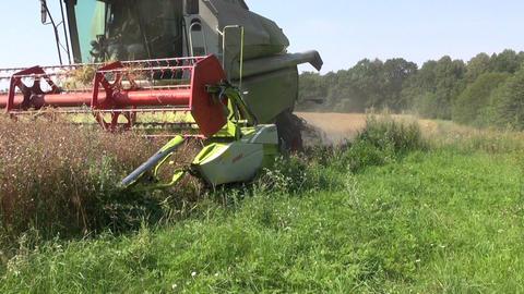 combine harvester harvesting ripe wheat in farm field Footage