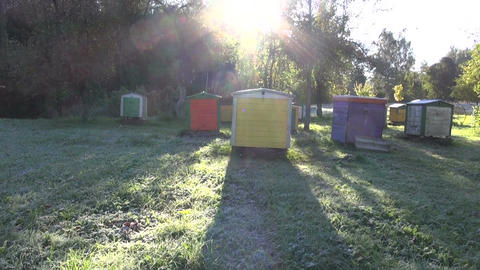 first frost rime on garden grass in morning and beehives Footage