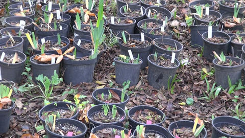 Plants in black plastic pots Footage
