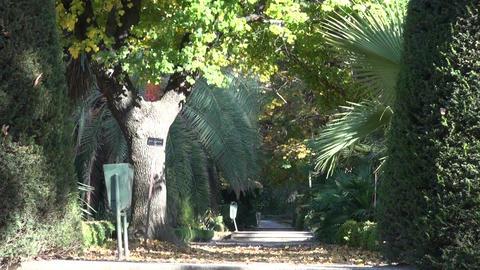 Alley in Madrid Botanical garden Footage