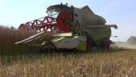 modern combine harvester harvesting ripe wheat in farmland Footage