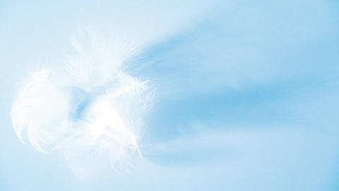 Two feathers down moving slowly in a soft light - decorative blue animation Animation