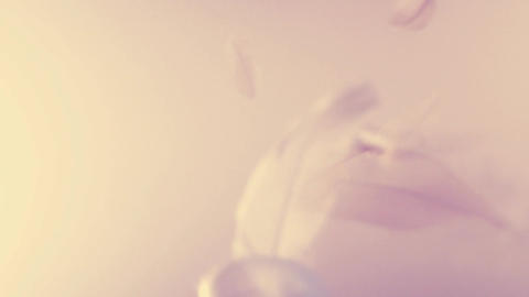 Feathers floating in the air - seamless animation in warm tone - golden hour Animation