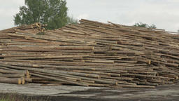 Large Piles of Cut Tree Trunks, Round Logs Footage