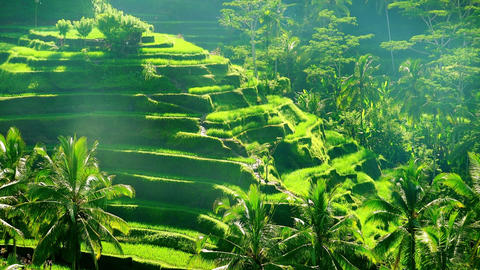 Amazing landscape with rice terraces illuminated by sunlight Footage