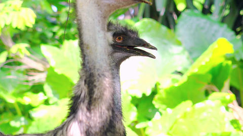 Close up ostrich bird in nature Footage