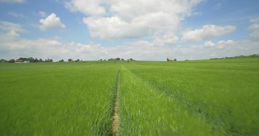 Aerial, High Speed Flight Above High Gras And Farmland, Germany ビデオ