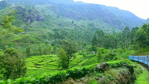 Train crossing amazing tea plantation landscape in highlands. Sri Lanka Footage
