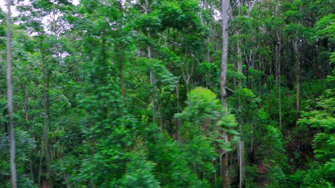 Tracking video of dark dense tropical forest ビデオ