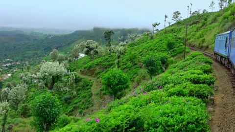 Train crossing amazing tea plantation landscape in highlands. Sri Lanka Footage