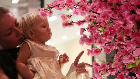 Child Touches Sakura Flowers Sitting on Mother Arms Footage