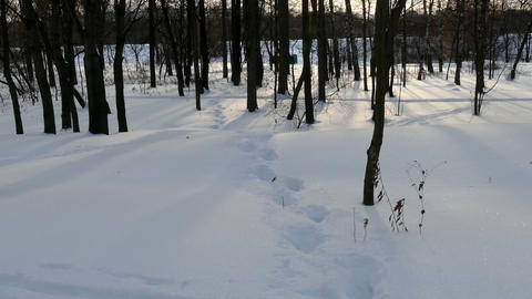 Winter forest, and footprints in the snow Footage