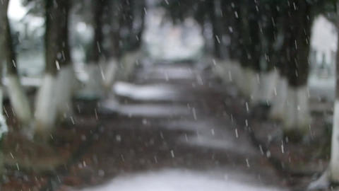 Snow Falling In Front Of Out Of Focus tree alley Live Action