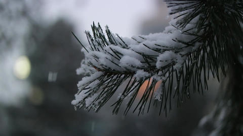 snowing slowly - lovely winter scenery with snow falling slowly and spruce cover Footage