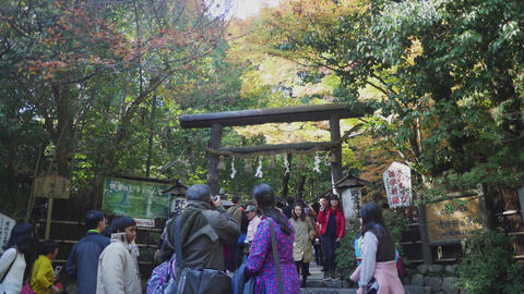 bamboo forest temple timelapse ライブ動画