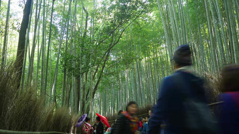 bamboo forest time-lapse Kyoto ライブ動画
