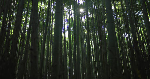 Bamboo forest in Kyoto, Japan ライブ動画