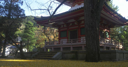 Small temple covered with yellow leaves ライブ動画