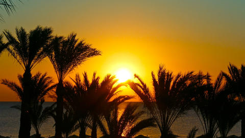 landscape with palms and sunrise over sea, zoom in Footage