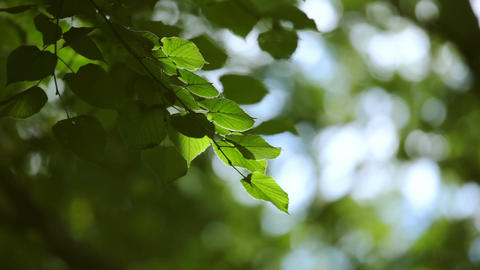 Video Background with Green Foliage Footage