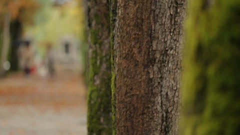 Close-up video of trees with moss standing in central park, ecology and nature Footage
