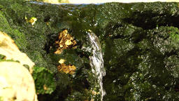 Small waterfall down algae filled rocks, loopable Footage