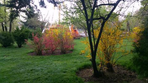 Spring in Park (5)