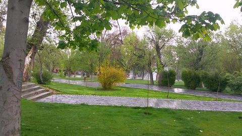 Spring in Park (6)