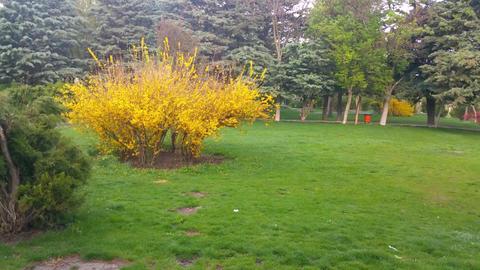 Spring in Park (8) Footage
