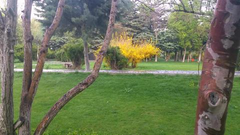 Spring in Park (9) Image