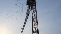 A flock of migratory birds gather on the crane Footage