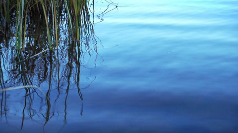 Ripple on Water Surface With Reed Footage