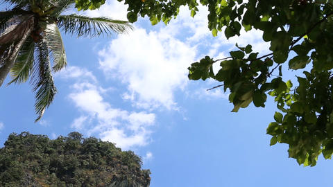 Clouds Drift above Palm in Tropics Footage