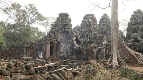 Roots Tree Banyan Angkor Wat 4k Footage