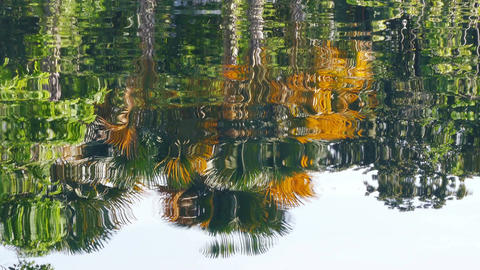 Reflection Water Background Trees 4k
