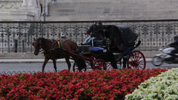 Chariot with horses to transport tourists around Rome Footage