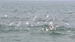 Gulls on the water of the ocean Footage