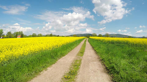 Walking on the road between two rapeseed fields Footage