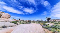 Joshua Tree National Park Desert Footage