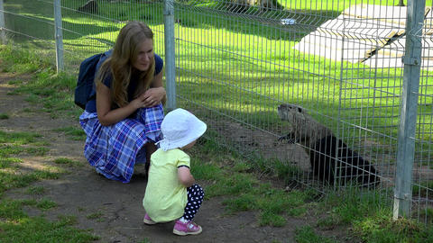 toddler girl with mother enjoy muskrat ondatra zibethicus animals in zoo Footage