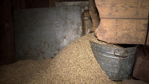 chaff and straw remain falling from grain sifting machine Footage