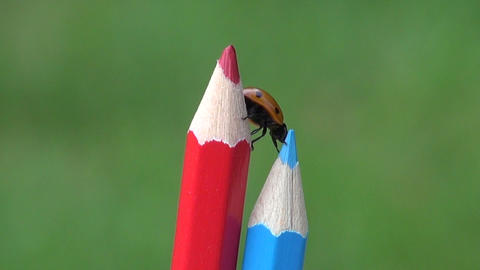 Ladybird lady-luck crawling on pencils Footage