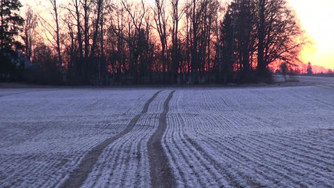 Frosty winter crop field during sunrise Footage
