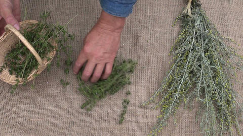 gardener preparing wormwood and savory herbs for drying on linen cloth Footage
