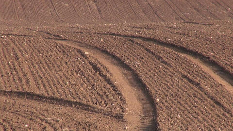Field of newly sown wheat Footage