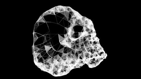 Plexus Skull Scanboard Loop Animation